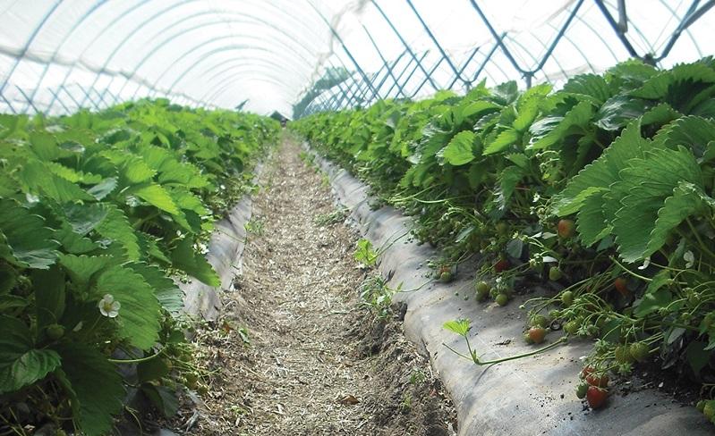 農業棚子修建成本费